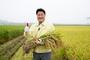 이천시 엄태준시장, 성큼 다가선 가을 첫 벼베기국내산 품종 해들 수확